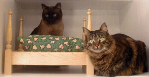 Washable Bed's for Cats
