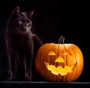 Black Cat Myths