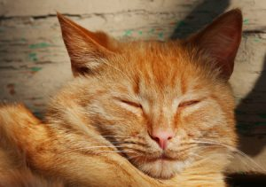 """Unraveling The Mystery of Your Cat's """"Slow Blink"""""""