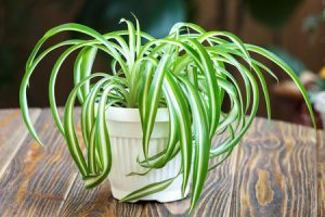 These Pet-Friendly Houseplants Are Perfect for Cat Owners