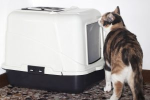 Why Won't My Cat Use Her Litter Box?