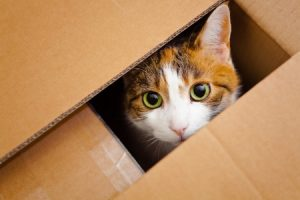 Scientists Investigate Why Cats Love Boxes So Much