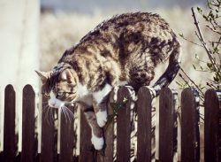 Cat Townhouses for Sale