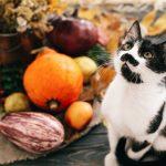 Indoor Cat Enclosures for Sale