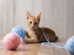 Commercial Cat & Kitten Housing