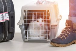 Commercial Cat Shelter Units for Sale