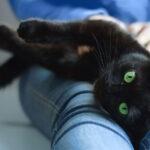 Commercial Cat Enclosures for Sale
