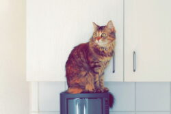 Commercial Cat Towers for Sale