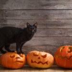 Black Cat with Orange Halloween Pumpkins on Wooden Background